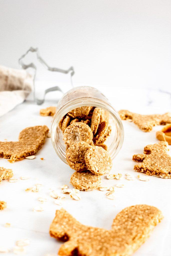 homemade dog biscuits in a jar